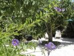 jardin coté nord