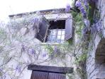 Another view with wisteria in bloom