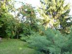 the little garden