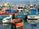 .. le port, où trouver poissons plus frais?
