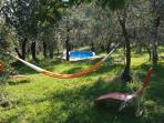 swimming pool in the olive groove