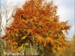 The autumn colours here are stunning! This beautiful tree is one of many at Limefitt.