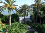 Garden with palm trees 15 m from the beach