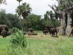 On Safari through Disney's Animal Kingdom