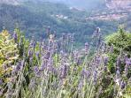 Views of Barga through the lavender.