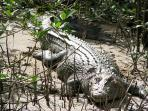 Experience a crocodile cruise on the Daintree River