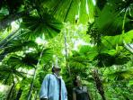 Take a private tour of the Daintree Rainforest