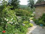 The cottage dates stands in an idyllic, secluded garden, full of attractive plants and shrubs