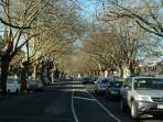 Enjoy a stroll down Auckland's prettiest inner city streets