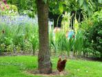 Beyond your private enclosed garden you might see free range hens and ducks. A hit with children.
