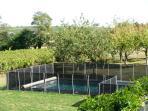 Environnement de la piscine