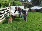 Feeding pet lambs in spring