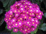 fleur de notre jardin