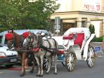 View the resort by carriage.