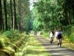 Nombreuses pistes cyclables
