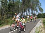 A cycle path through the pine forests