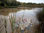 Woodpecker lake