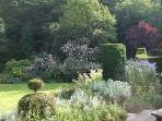 The massive Belvedere rose takes over from Paul's Himalayan Musk