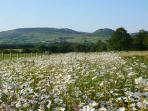Wildflower meadow in full bloom - views towards The Roaches - one of the top walks in the Country