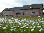 Luxury Barn Holiday Cottages with beautiful wildflower meadow on doorstep and stunning views