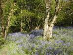 See the beautiful bluebell woods via footpaths - usually looking stunning in May
