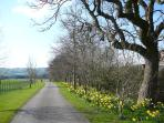 Entrance drive and Spring time daffodils at Troutsdale Farm