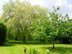 Garden, shady willow and fruit trees