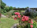Area of Cottage garden
