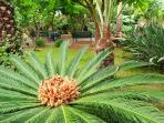 Jardín adjovimar