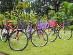 Brand new bicycles to help you explore the area
