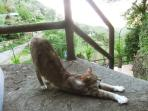 Cats drop by for a stretch on the veranda