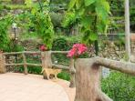 Cats enjoy strolling around the terrace