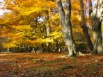 Epping Forest in Autumn - the forest starts just 250 yards from Sunnyside