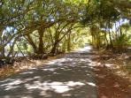 Stunning tree tunnels shade the road near the cottage