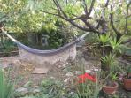 Hammock hung in the shade of two cherry trees