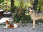 En Casa El Caminero se admiten mascotas, ellos también tienen derecho a disfrutar de la naturaleza.