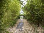 Camino de bambú que separa los bungalows de la piscina