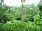 One of Many Public Tropical Gardens
