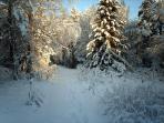 Skansen's 'Winter Wonderland' Driveway!