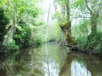 on the canal network - a veritable cathedral of green