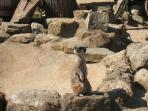 Visit the animals at IOW Zoo or Amazon World