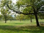 The walnut trees