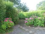 More garden area