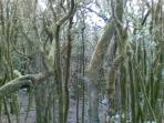 Bosque de Laurisilva a 25 km