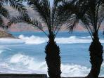 The palms at Vai