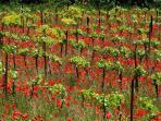 Promenades aux sources de rosé de Provence.