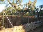Fences surranding the property
