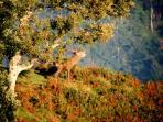 Actividades de interpretación de la Naturaleza, como por ejemplo la berrea del ciervo en Otoño