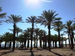 Palmeras en la playa de Torremolinos