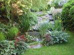 Pond area in the garden with lots of ferns, hostas and irises.